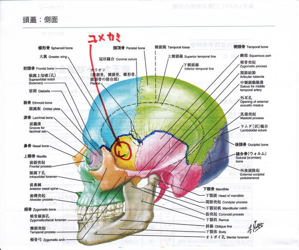「頑固な頭痛」、「肩こり」を脳脊髄液の流れをよくして改善!
