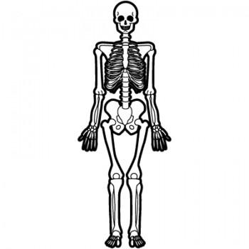 bones-350x350[1]