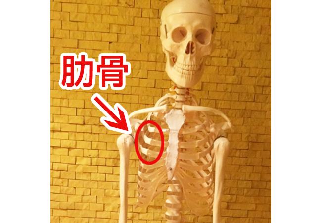肋骨の歪み